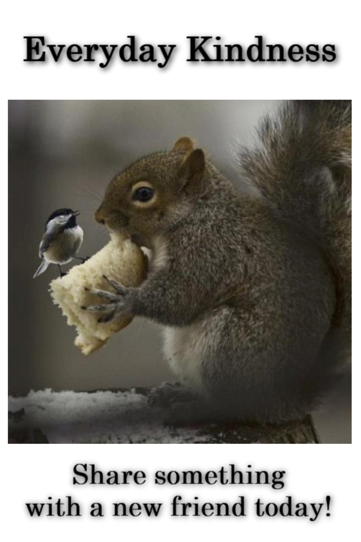 kindness between squirrel & bird